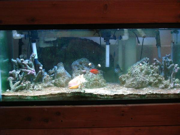 Jason's fish tank